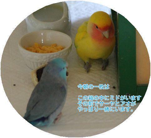 ①‐01サーヤとアオ