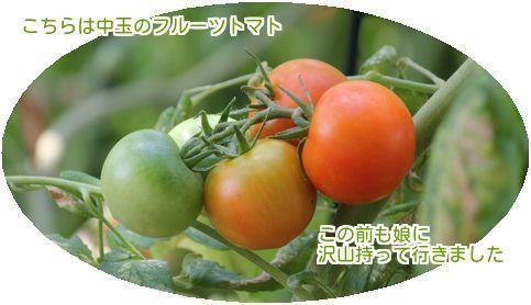 ⑦中玉トマト