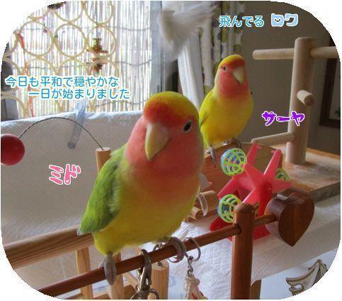 ⑤鳥の一日の始まり