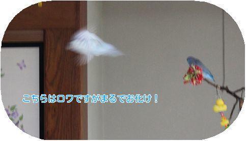 ⑤ロワ飛ぶ