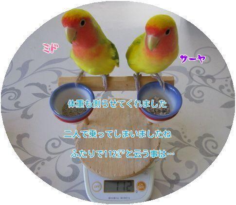 ④ミドサーヤ体重