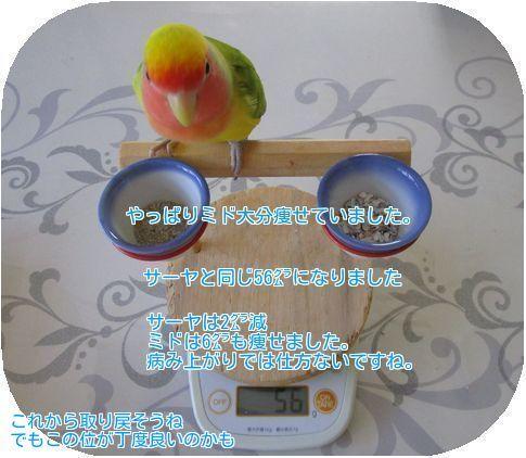 ⑤ミドの体重
