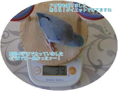 ⑥アオの体重