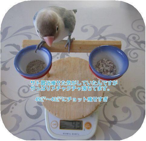 ⓻サトの体重