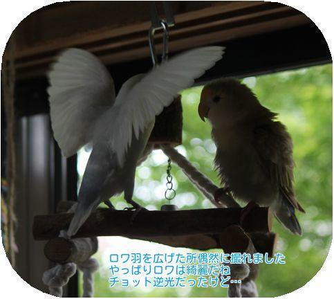 ③ロワの羽根