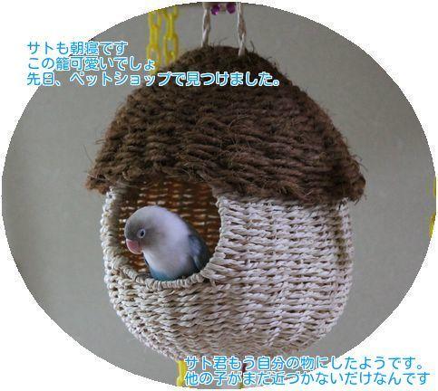 ⑤サトの籠