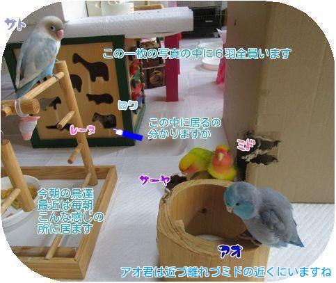 ①6羽の朝