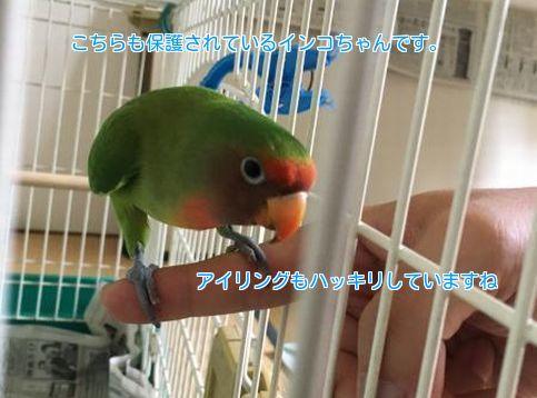 ②保護鳥02