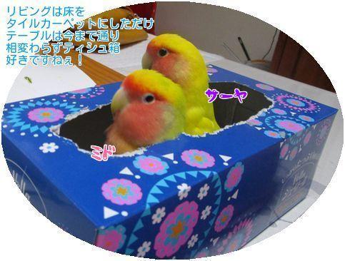 ①ミドサーヤティシュ箱