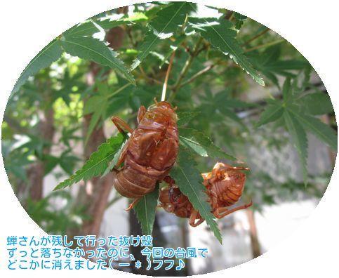 ⑥蝉の抜け殻