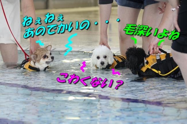 ニコちゃんモコちゃんココネちゃんお水の日 004