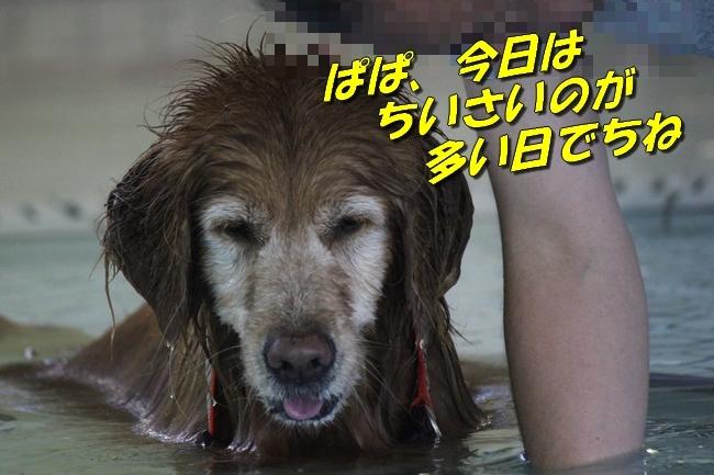 ニコちゃんモコちゃんココネちゃんお水の日 028