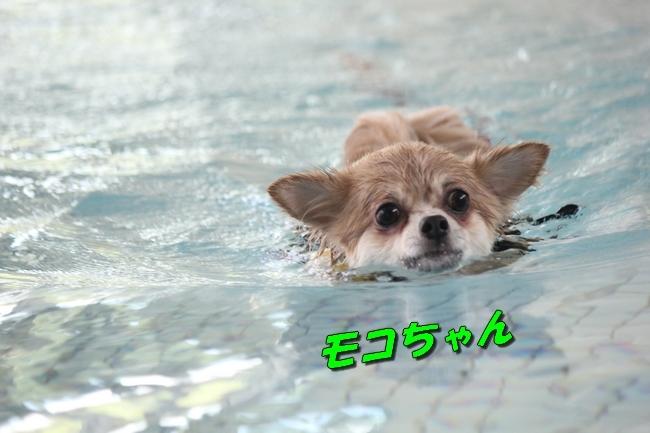 ニコちゃんモコちゃんココネちゃんお水の日 069