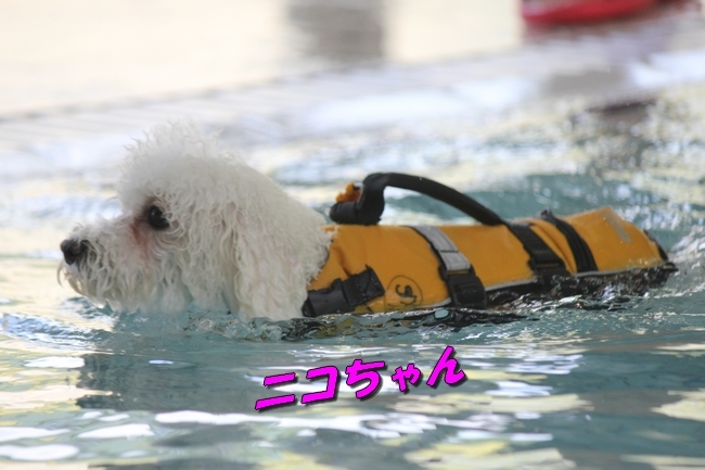 ニコちゃんモコちゃんココネちゃんお水の日 074