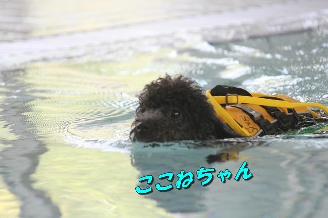 ニコちゃんモコちゃんココネちゃんお水の日 081