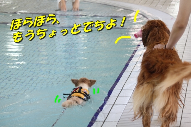 ニコちゃんモコちゃんココネちゃんお水の日 112