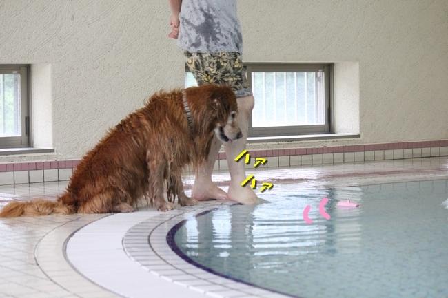 プールと和牛 132