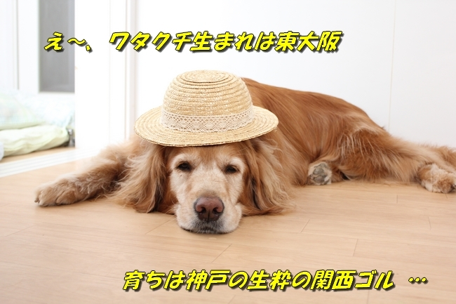 表情麦わら帽子 041