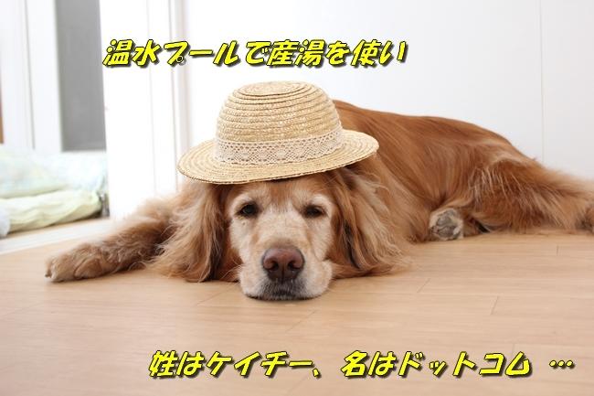 表情麦わら帽子 043