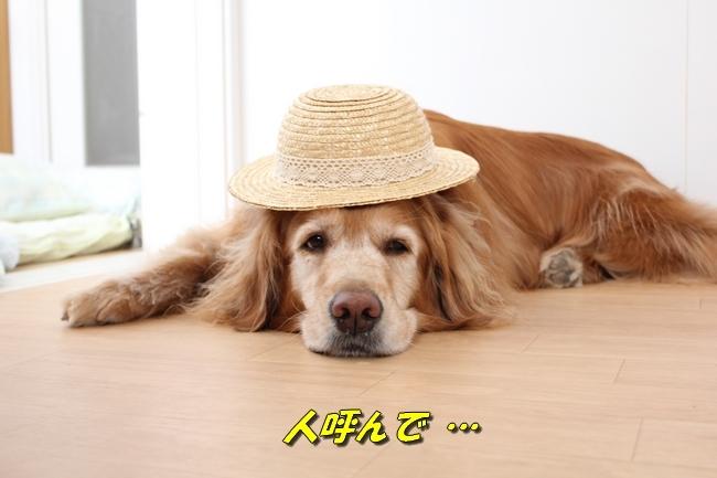 表情麦わら帽子 044