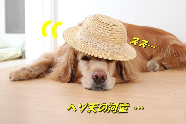 表情麦わら帽子 049
