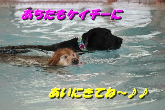 仁くんとプール 092