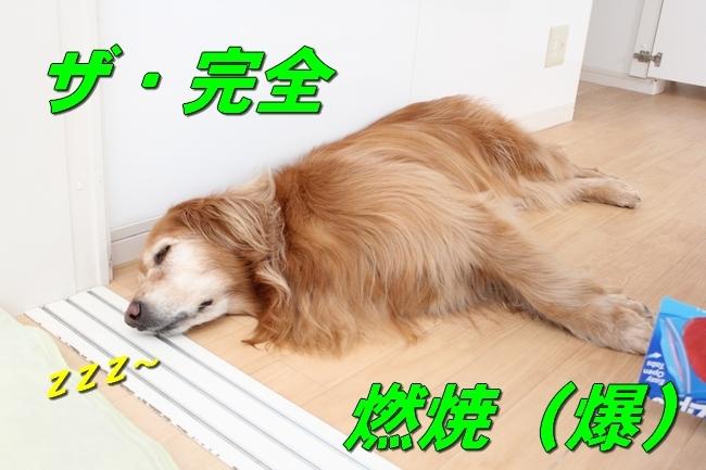 爆睡 004