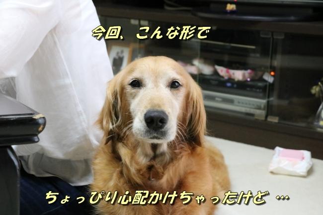 エルフちゃんマリナシティ 303