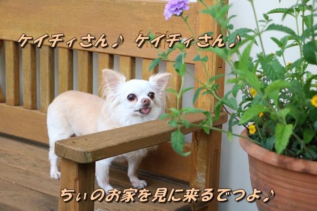 IMG_6042_20170822142725d21.jpg