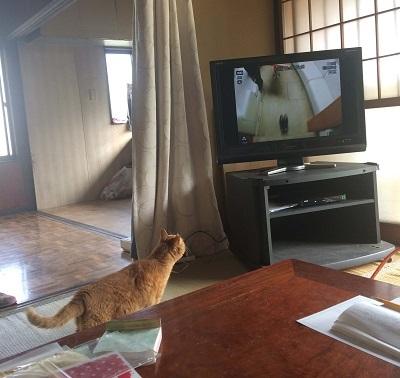 初めてのテレビ② (2)