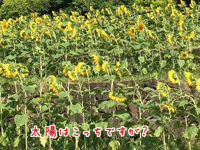 IMG_7215.jporder=