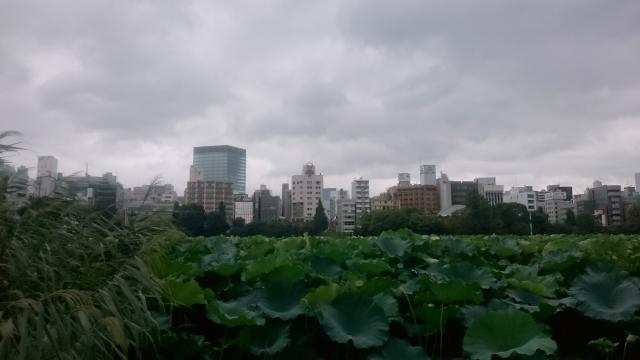 sinobazu