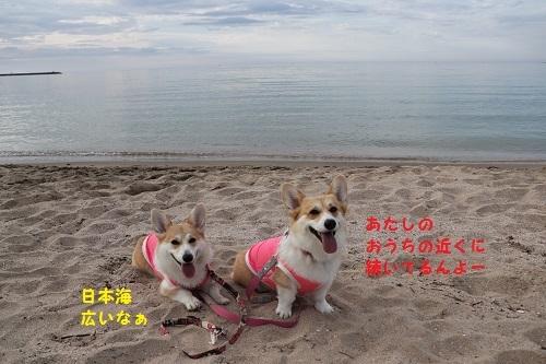 日本海バック