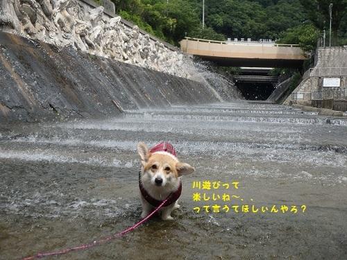 川遊びって、、