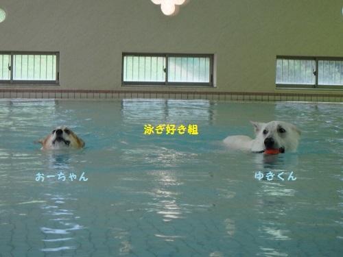 泳ぎ好き組