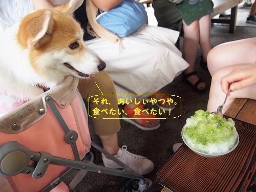 赤福氷食べたい