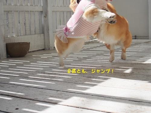 そろってジャンプ