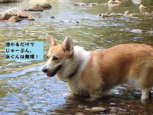 泳ぐんは無理