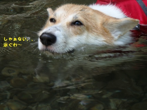 しゃぁなく泳ぐ
