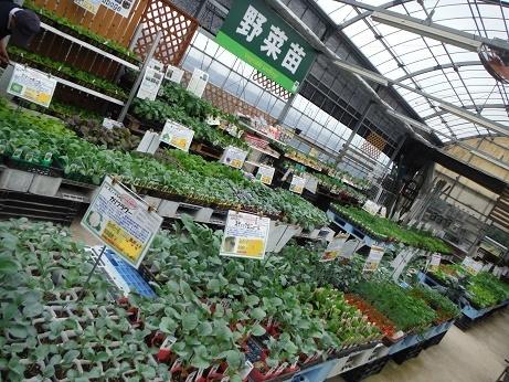 201709161野菜