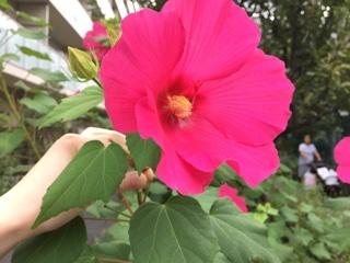 お散歩中のお花