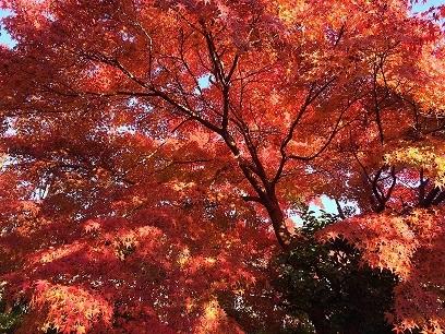 一番大好きな嵐山の紅葉