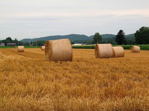 s-小麦ロール