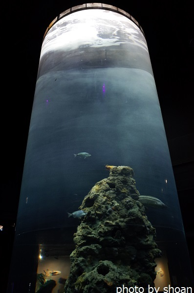 170724ジェノヴァ水族館