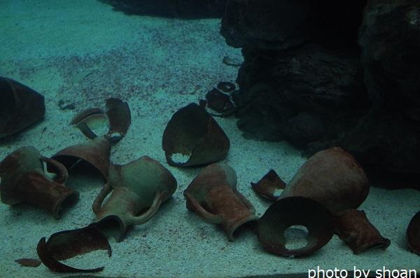 170724ジェノヴァ水族館2