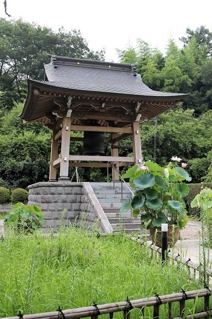 泰翁寺の蓮