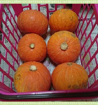 野菜かぼちゃ1