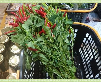 野菜とうがらし1