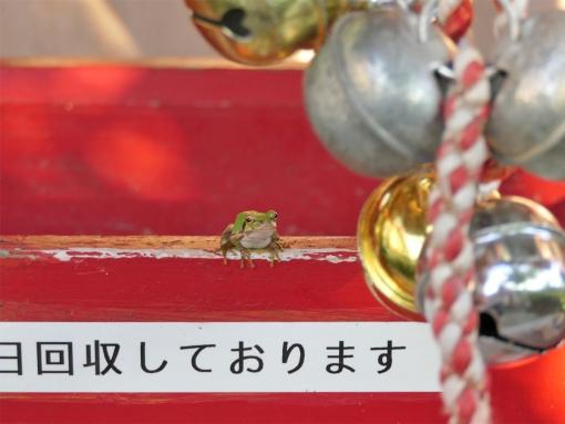 02 myoken kaeru
