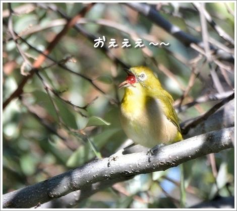 2017915mejiro.jpg